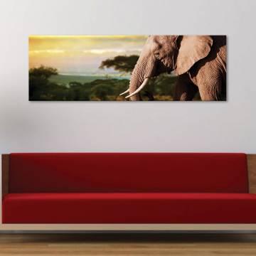 Peaceful giant - békés elefánt - vászonkép