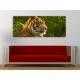 Respect of tiger - tigris vászonkép 100391