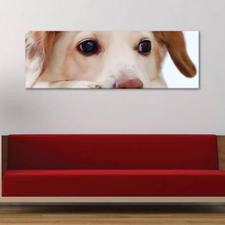 Puppy - kis kutya - vászonkép