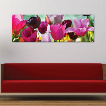 Tulips in Holland - tulipánok - vászonkép