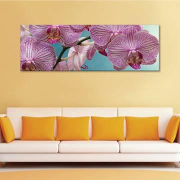 Wonderful orchids - orchidea - vászonkép