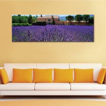 Lavenders - levendula - vászonkép