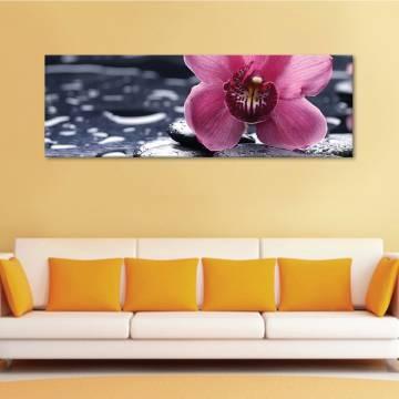 Orchid alone - Szomjas orhidea - vászonkép