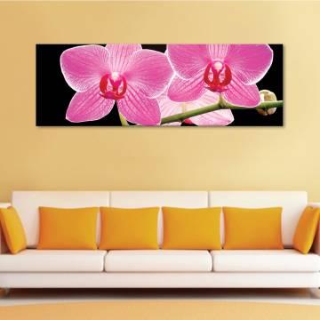 Black and pink - Légies orhideák - vászonkép