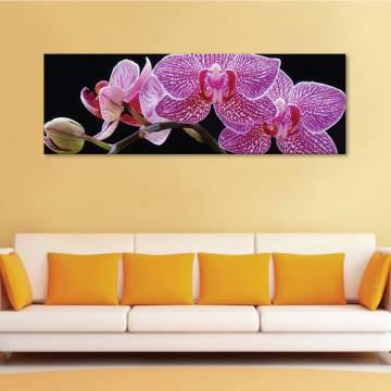 Tiggrer orchids - Tigris orhidea - vászonkép