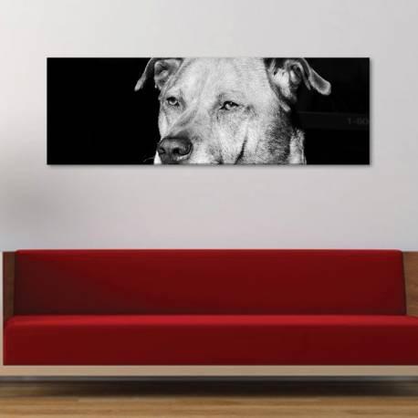 Look into my eyes - kutya - vászonkép