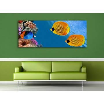 Underwater - tengeri díszhalak vászonkép 100425