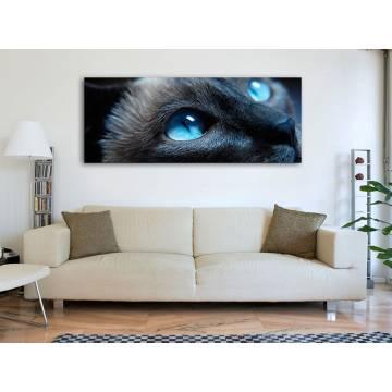 Blue Cateyes - Kék Macskaszemek - vászonkép 100494