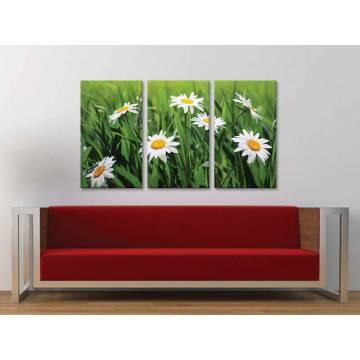 Három részes vászonkép - Camomile meadow - kamilla virág mezõ - no. 3a-100162
