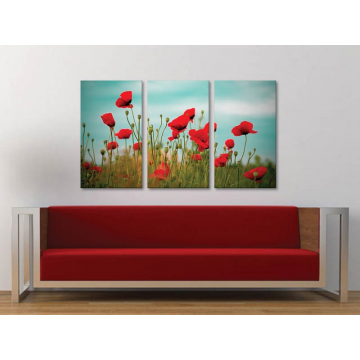 Három részes vászonkép - Poppys and clouds - pipacs és felhõk - 3a-100172