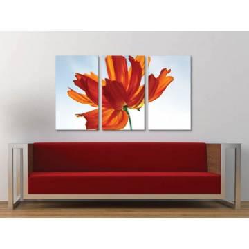 Három részes vászonkép - Red petals in the sun - vörös szirmok a fényben - vászonkép 3a-100211