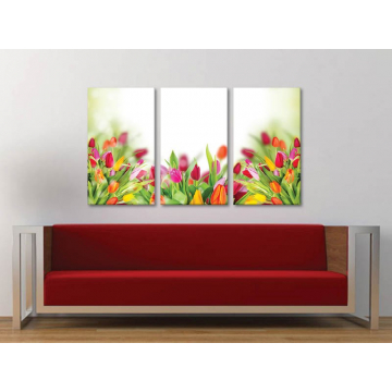Három részes vászonkép - Coloured tulips - tulipánok - no. 3a-100153 - vakrámára feszített vászonkép