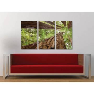 Három részes vászonkép - Forest giants - erdei óriás fák - vakrámára feszített vászonkép 3a-100217