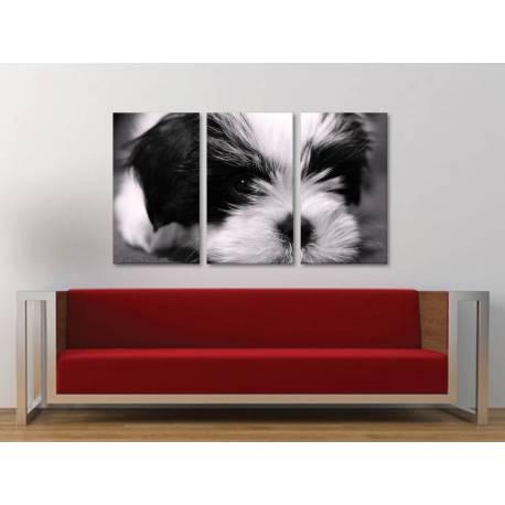 Három részes vászonkép - Darling - kutyus vászonkép 3a-100253