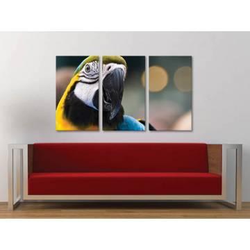 Három részes vászonkép - Parrot colors - színes papagáj vászonkép 3a-100278