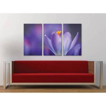Három részes vászonkép - Spring crocus - virág vászonkép 3a-100308