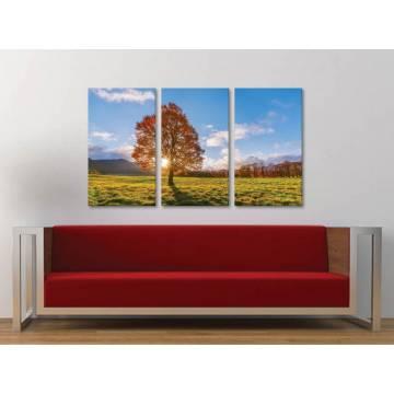 Három részes vászonkép - Autumn Sunshine - õszi napfény vászonkép 3a-100318