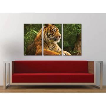 Három részes vászonkép - Respect the tiger - tigris vászonkép 3a-100391