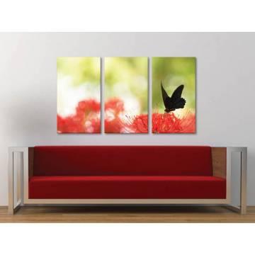 Három részes vászonkép - Contrast - Fekete pillangó, piros virág vászonkép 3a-100397