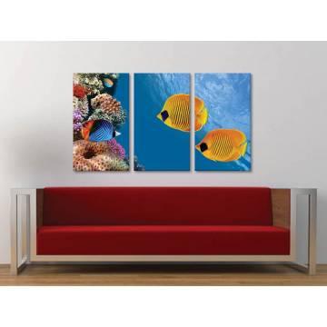 Három részes vászonkép - Underwater - tengeri díszhalak vászonkép 3a-100425
