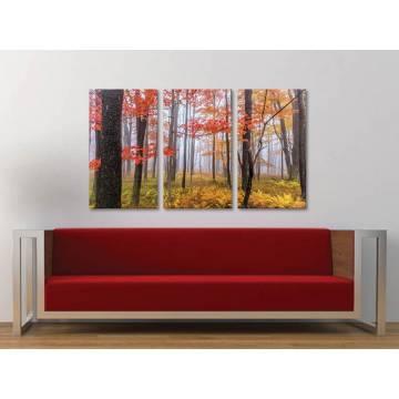 Három részes vászonkép - Colorful autumn trees - Színes õszi fák - Vászonkép - 3a-100449
