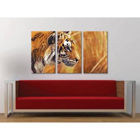 Három részes vászonkép - Tiger Watching - Tigris - vászonkép 3a-100484 - 1