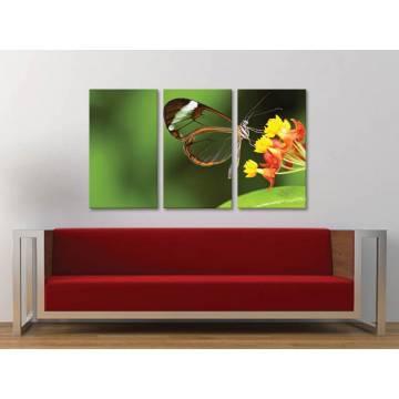 Három részes vászonkép - Butterfly Glass Wings - Átlátszó Pillangó Szárnyak - vászonkép 3a-100490